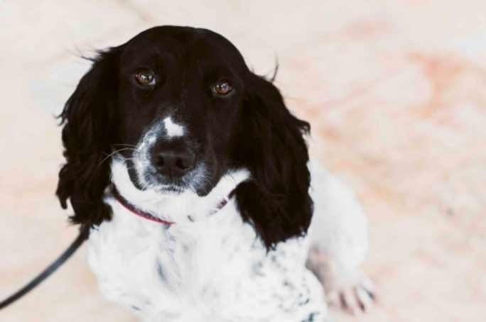 €29,000 in undeclared cash discovered by Peter the sniffer dog