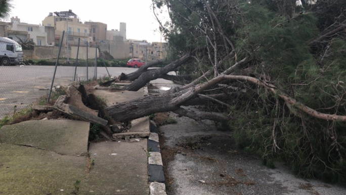 Trees in Trade Fair Naxxar were uprooted during the storm