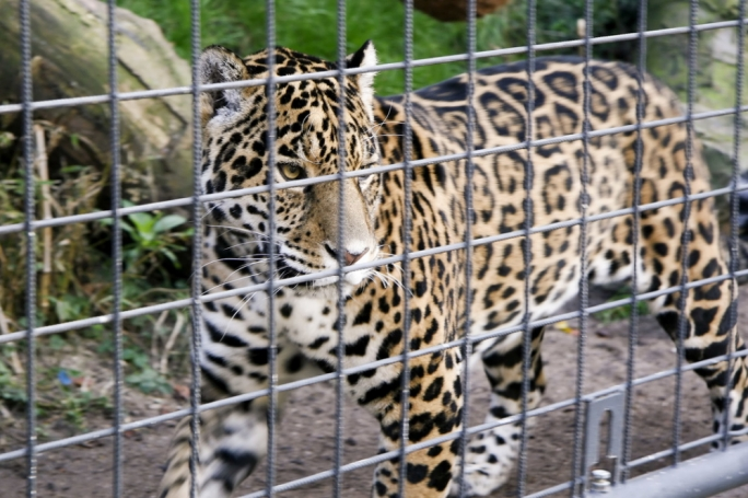 Zoos 'unnecessary and undesirable' – ADPD says private menageries must be phased out