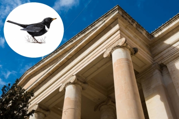 Pensioner cleared after stuffed bird oversight landed him in hot water