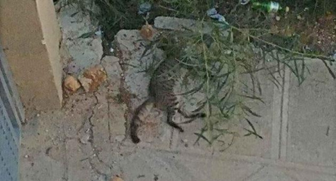 The cat was killed at Golden Bay