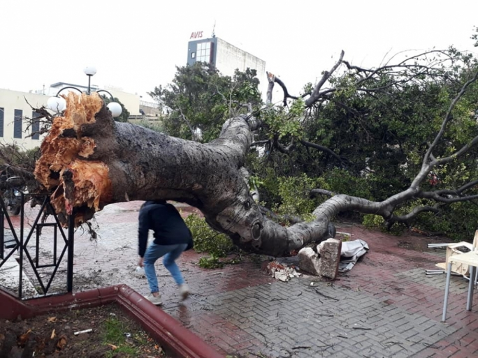 Even trees with sizeable barks were torn apart: a testament to how powerful the storm was