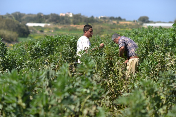 Rising demand and falling produce signals 'hunger problem' for Malta