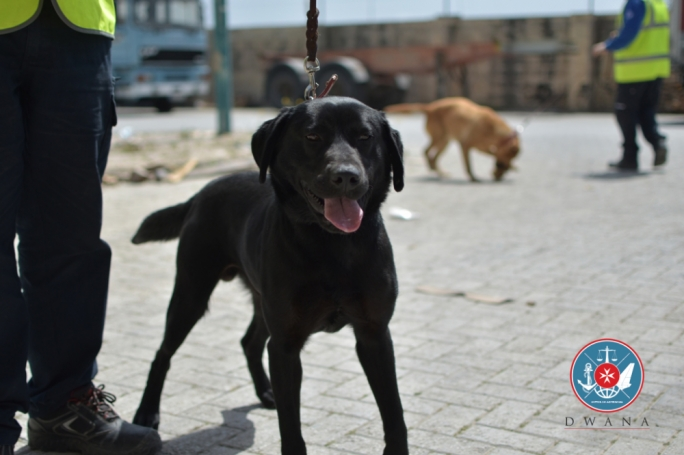 Sophie the customs dog leads officials to €24,000 in undeclared cash