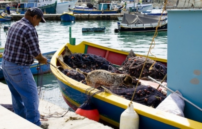 By 2010, the purse seine industry was buying out the ITQs of smaller fishers and accumulating the quota and fishing permits of the artisanal fishermen.