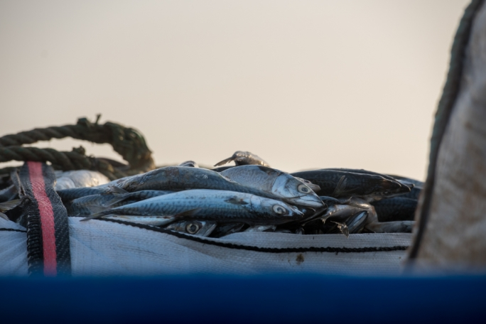 Crisis's tumbling prices spell uncertain future for Maltese fishers