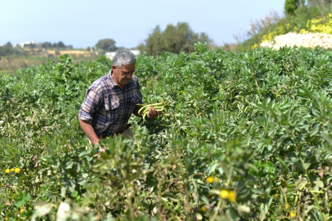 Climate change will aggravate water scarcity for Maltese agriculture