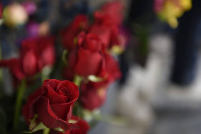 Timeless: Roses remain the Valentine's Day gift of choice. Photo: James Bianchi/MediaToday