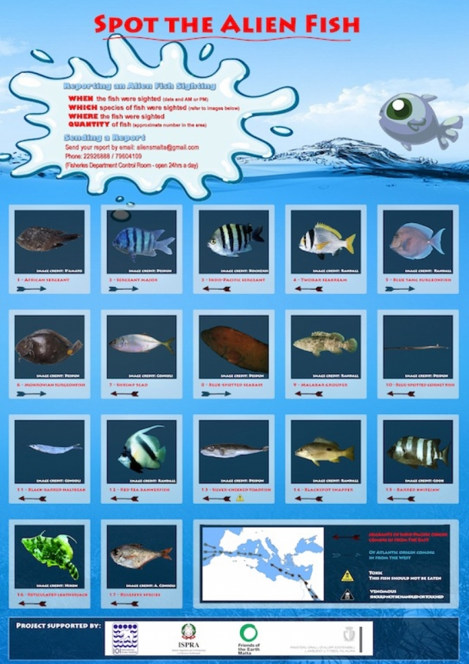 Posters featuring photographs for a total of 32 fish species have been distributed to all local fishermen and SCUBA diving clubs