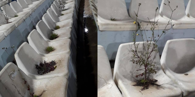 Football fan group posts photos of weeds growing out of national stadium seats