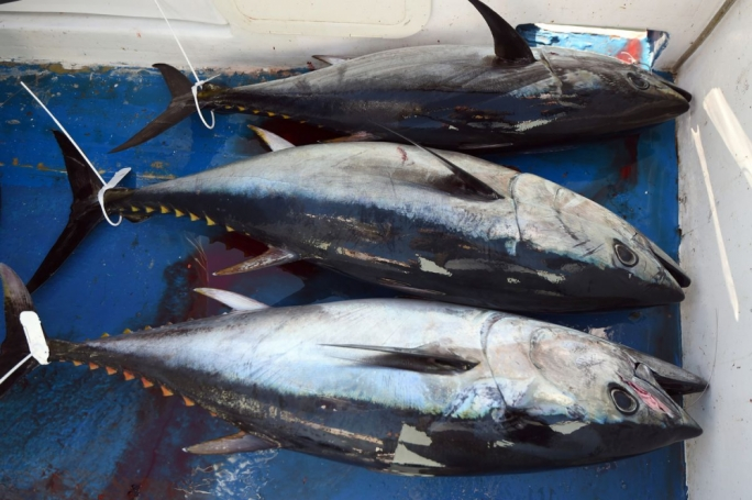 Tuna sales net €168 million