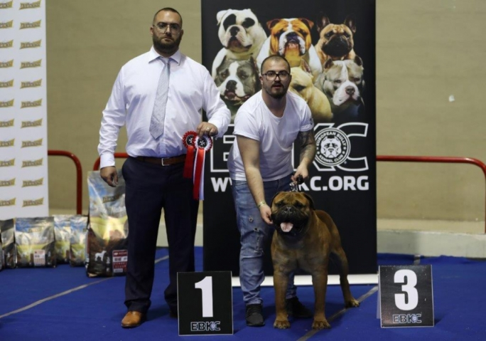 The Best in Show award was awarded to a bull mastiff owned and bred locally by Jurgen Borg