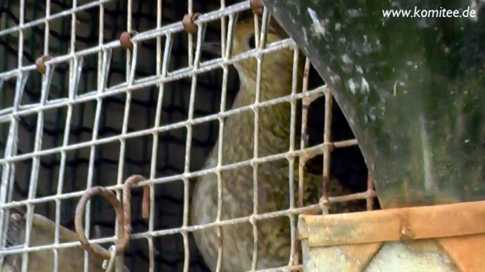 Police deny claims it refused to investigate illegal trapping