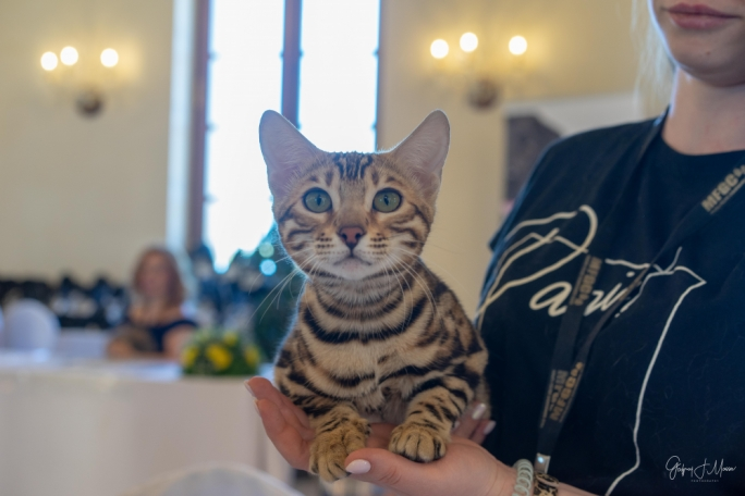 Miao! Purrfect show lined up for Malta's 79th International Cat Show