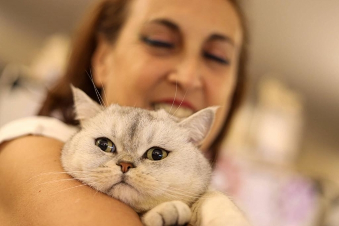 A purrfect display of cattitude – the Malta International Cat Show in pictures