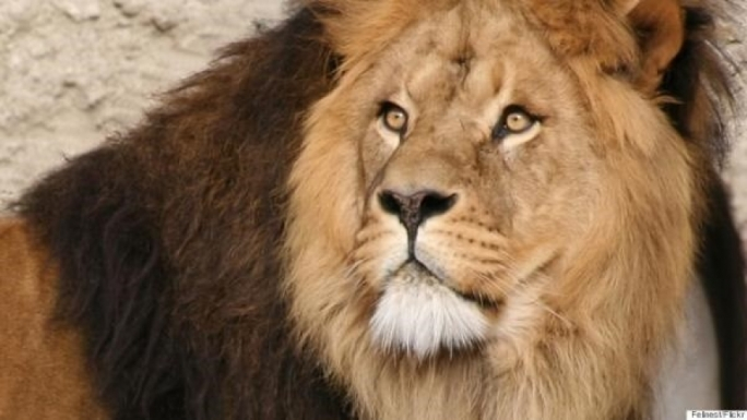 best price amazing selection cheaper US dentist blamed for killing of Cecil the lion in Zimbabwe ...