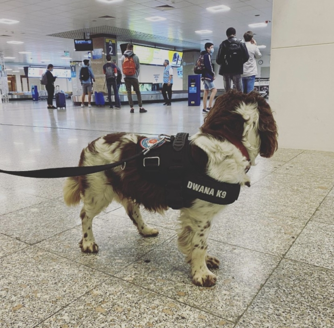 Customs dog sniffs out €22,000 in undeclared cash on airport passenger