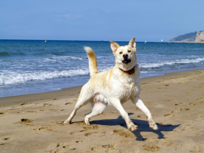 Dog Friendly Beach in Baħar iċ-Ċagħaq has been reopened