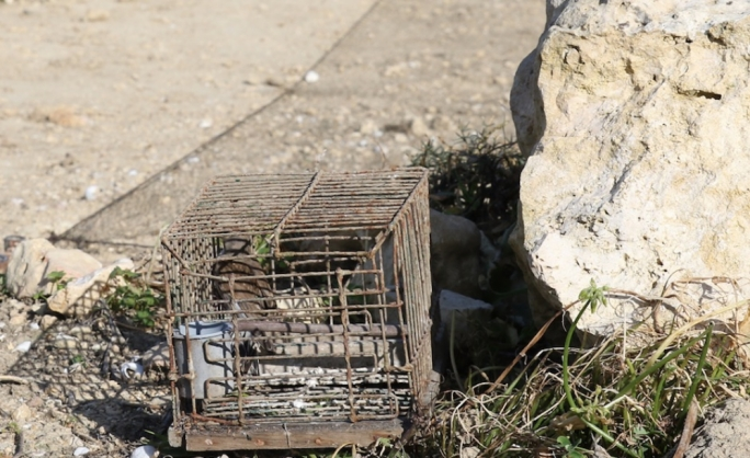 The Ornis Committee is recommending a finch trapping season despite an ongoing court case