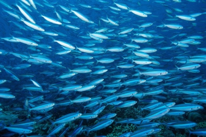 Higher mercury in Maltese waters means fish-lovers must choose well