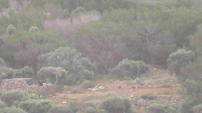 [WATCH] FKNK 'official' filmed shooting protected turtle dove, BirdLife says