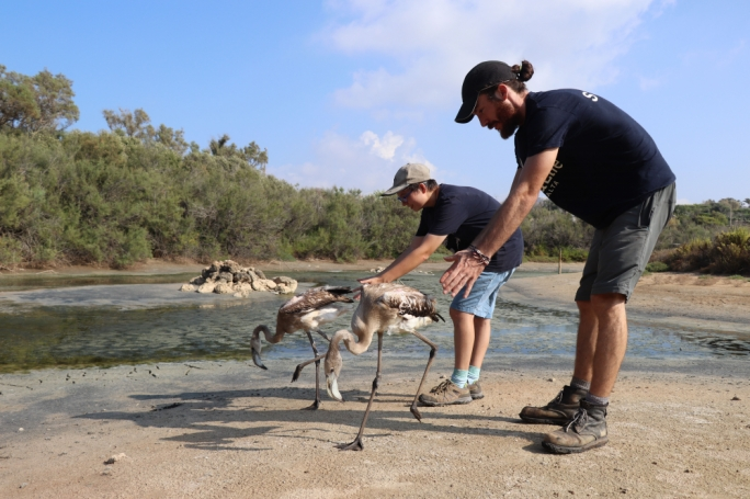 Two flamingos released back into the wild