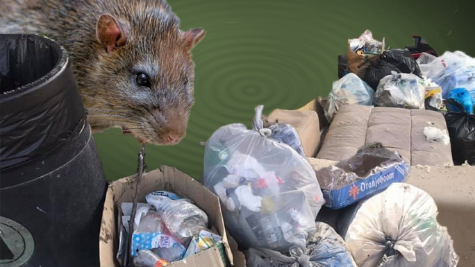 A butcher whose business is in St Paul's Bay explained how rats are rife since garbage remains uncollected over a period close to a month