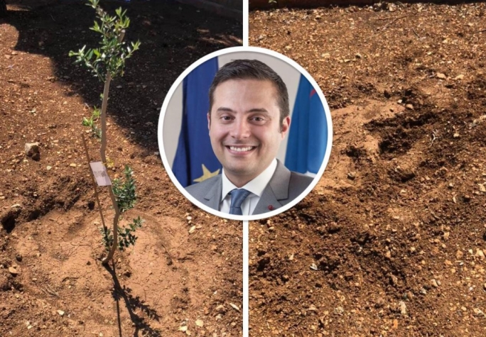 Gżira mayor's anger after trees are stolen: 'You have to be a dumbass and stupid'