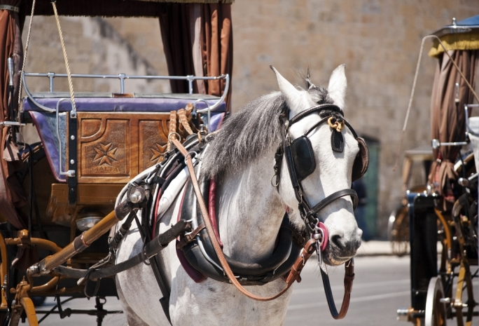 No more carriage rides in the scorching sun? New horse-drawn
