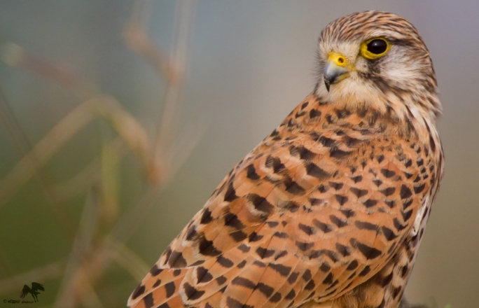 A man's one year prison term for shooting a kestrel has been reduced to a suspended sentence (File photo)