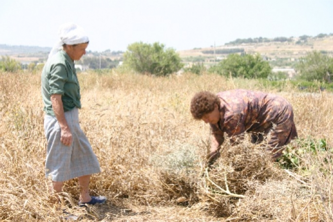 The dry winter caused parched fields and poor crop yield