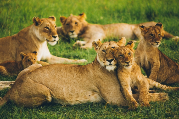 7 reasons why every Maltese should visit the Kruger National Park in South Africa