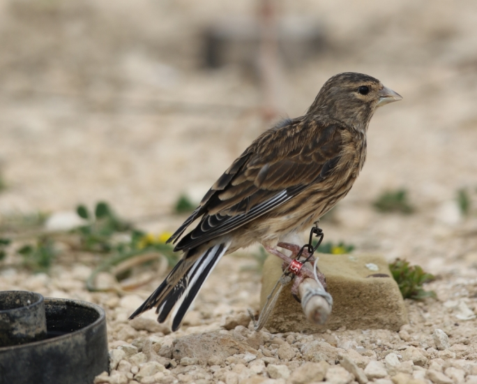 Wild Bird Regulation Unit accused of taking credit for CABS's work