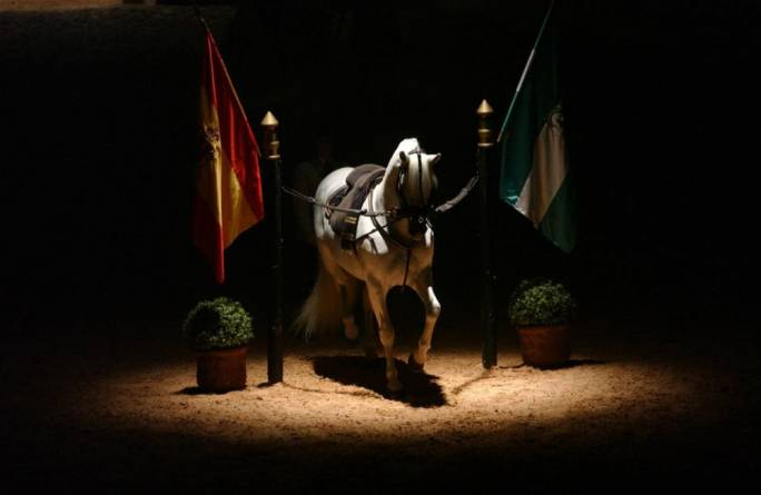 Marvel at the choreography of the authentic horse ballet at the Royal Andalusian School of Equestrian Art
