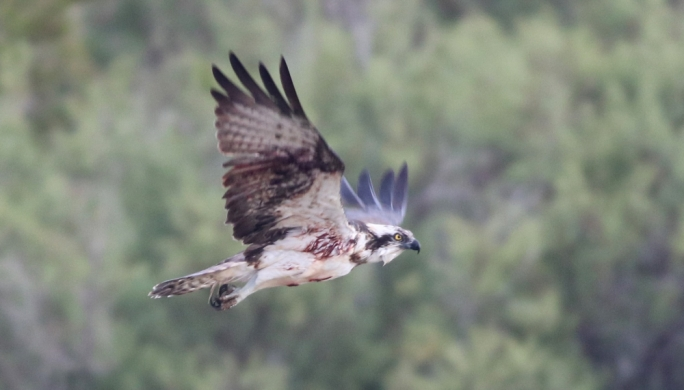 BirdLife Malta receiving non-stop reports of illegal hunting