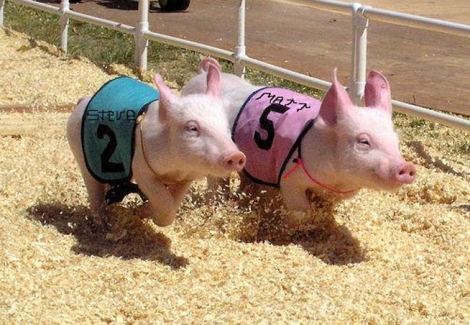 Updated | MP to oppose 'pig race' during Zejtun bacon festival