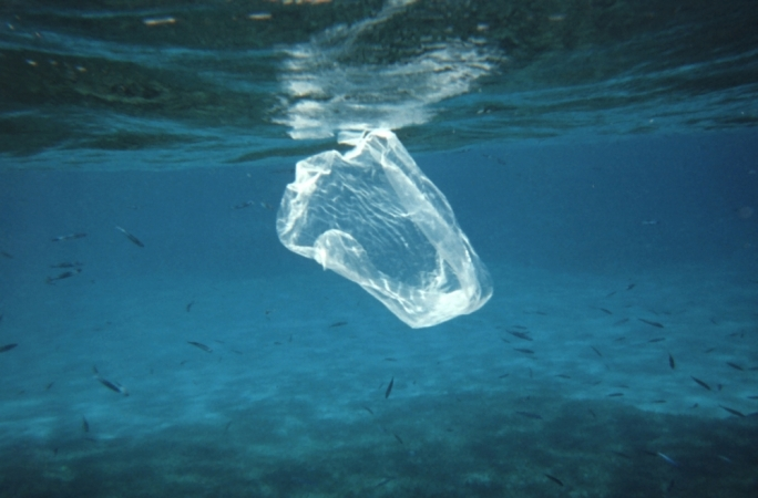 Plastic in our seas ends up on our plates