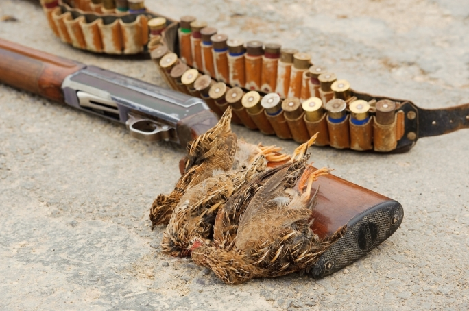 Considering that there are 10,467 hunters licensed to hunt on land and a further 256 licensed to hunt on sea, statistics indicate that for each three hunters licensed in Malta only one bird was shot