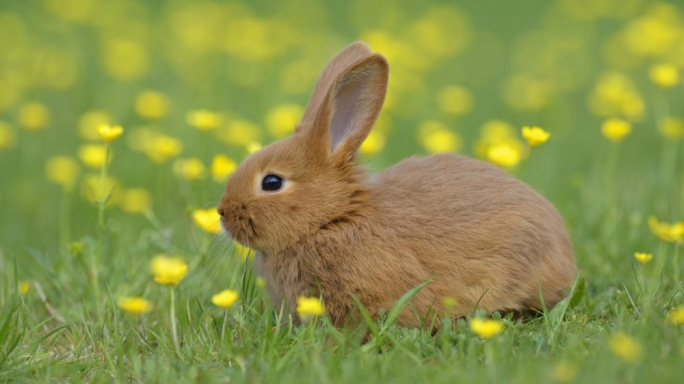 Owners warned of highly contagious mutated virus that kills rabbits within days