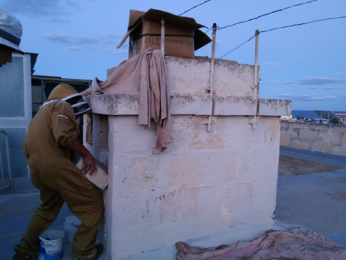 Beesaversmalta removing hives from urban areas