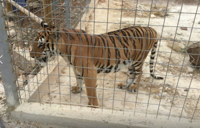 PA set to regularise illegal zoo against €10,000 fine