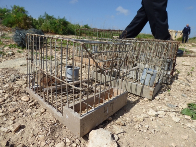 Seized linnets: police are seen removing trapping nets. Photo: CABS