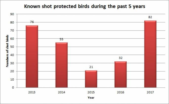 Known shot protected birds during the past five years