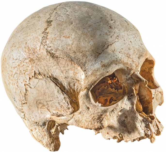 Prehistoric aliens in Malta? Hypogeum's trove of elongated skulls to get cutting-edge study