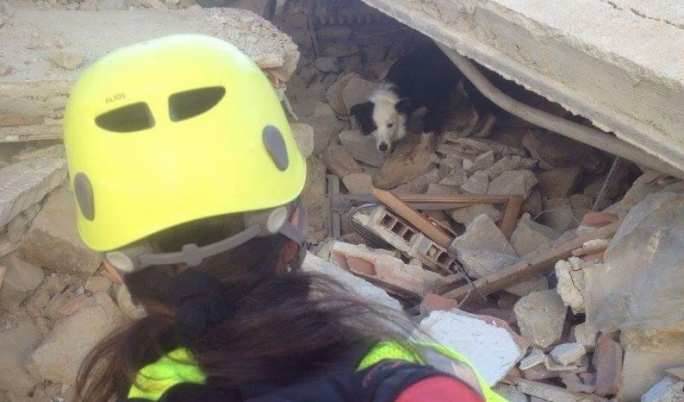 SOS Malta called back to Amatrice: rescue dogs found to be