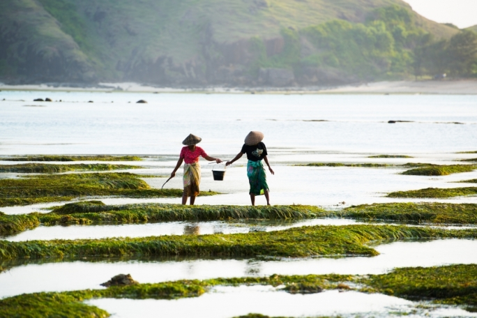 Take walk through the rice paddies of Lombok, Indonesia in Marc Casolani's travel article in this month's Vida