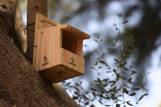 400 manmade nesting boxes will be installed in several locations in order to encourage breeding