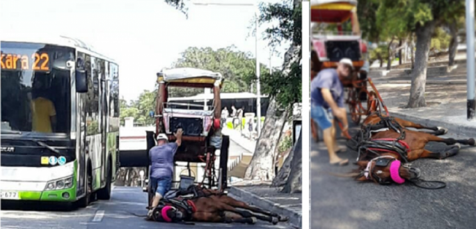 The horse collapsed on Saturday in Pieta